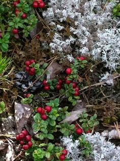 Luonnossa Nature, Plants, Red, Naturaleza, Plant, Nature Illustration, Off Grid, Planets, Natural