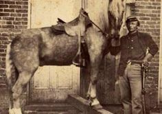 Civl War  horse with Richard Wente holding the horse for Cpt. duPont.... Great looking horse!!!
