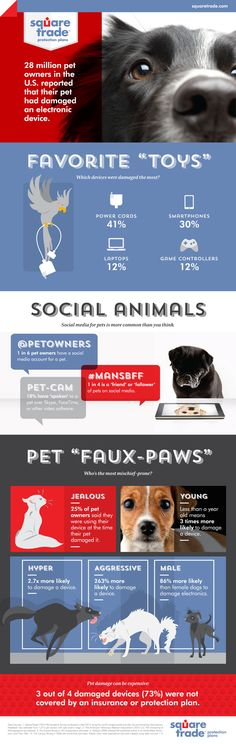 Jealous Dog Chew Up Your Smartphone? That's What You Get. (Infographic)