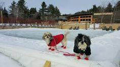 Pets at Topnotch Resort in Stowe, VT