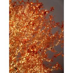 LIGHTS ❤ liked on Polyvore featuring backgrounds, autumn and pictures