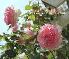 Bellas Rose Cottage: A Lazy August Garden Stroll...