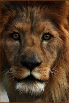 Lion Painting by chamirra on deviantART