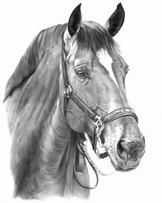Laureus by Scottish illustrator, Sheona Hamilton-Grant.  This graphite illustration on paper is simply wonderful!