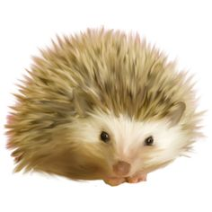 Hedgehog ❤ liked on Polyvore featuring animals