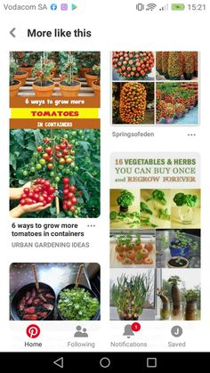 Cactus Plants, Herbs, Canning, Vegetables, Cacti, Cactus, Herb, Vegetable Recipes, Home Canning