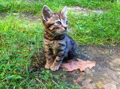 One cat, one leaf