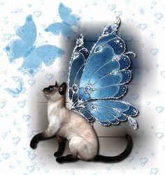 fairy cat adopt