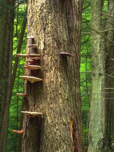 ☆ Shelved - Bracket fungus, Loyalsock State Forest, Sullivan County :: By Nicholas A. Tonelli ☆
