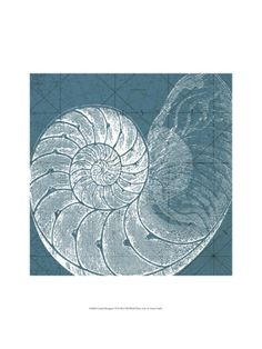 Ocean art in the color of my rug.  Coastal Menagerie VI Giclee Print by Vision Studio at Art.com