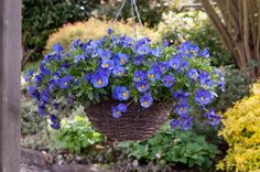 How do YOU accessorize your garden? We think new Cool Wave Pansy Blue Skies is a fab choice for spring. Win some here: www.wave-rave.com