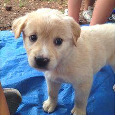 Holy puppy, I want