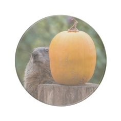 Groundhog Pumpkin Peekaboo Coaster - Halloween happyhalloween festival party holiday