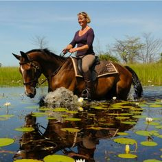 Horse safari information