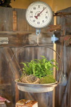 simple & pretty - fern, nest, moss