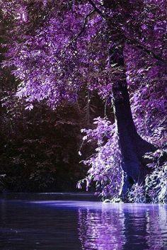 A purple haze sunset on the creek. Purple Love, All Things Purple, Shades Of Purple, Purple Sunset, Purple And Black, Beautiful World, Beautiful Places, Purple Reign, Purple Aesthetic