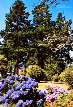 Flowers and Trees in Brookings, Oregon. Brookings Oregon, Coast, Trees, Flowers, Plants, Photography, Pictures, Photograph, Tree Structure