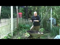 Digging with Doug: Planting tomatoes horizontally