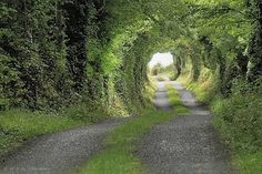 I want to go here! Tree Tunnel, Clare County, Ireland Photo by haukesteinberg Oh The Places You'll Go, Places To Travel, Places To Visit, Tree Tunnel, Road Photography, Landscape Photography, All Nature, To Infinity And Beyond, Ireland Travel