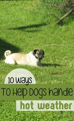 10 Ways To Help Your Dog handle hot weather