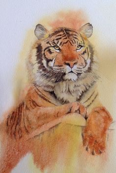 Watercolour Tiger painted from a copyright-free photo made available to artists on the wonderful web resource paintmyphoto.ning.com. Artist is Judith Jerams
