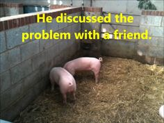 Growth Mindset in a pigsty