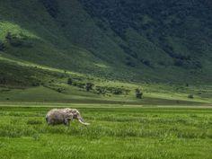Elephant in the Ngorongoro Crater, Tanzania..
