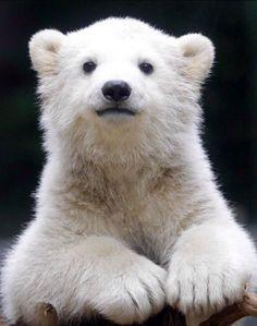 ♥ Cute Polar Baby.