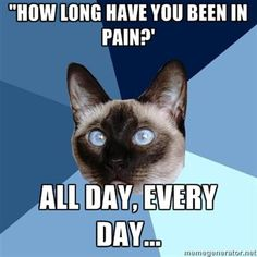 Chronic illness cat knows what's up.