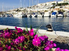 Sitges Marina is a beautiful harbour offering plenty of entertainments with a great choice of bars and restaurant. Barcelona 2016, Spain Holidays, Sitges, Pedestrian, Rental Apartments, Sailing, Motor Yachts, San, Beach