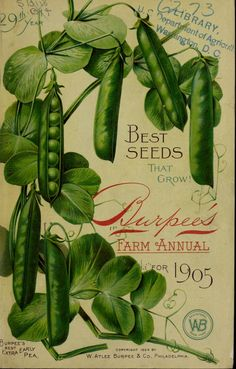 Front cover of 'Burpee's Farm Annual' for 1905 with illustrations of 'Burpee's Best Extra Early Pea.' W. Atlee Burpee & Co. Philadelphia. U.S. Department of Agriculture, National Agricultural...