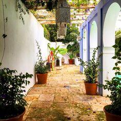#andalucia #marbella #malaga #españa #spain #beautiful #casa #decor #design #decoracion #decorations #garden #gardens #gardener #gardening #gardenlife #homedesign #marbella2015 #marbellabeach #marbellalifestyle #interiors #interiores#otoño #november #noviembre #life #love