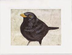 Cani in Cornice: Blackbird