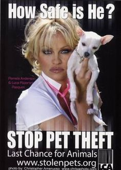 Dog Owners: Will Fear of Thefts Make This Viral? #dogs - http://growmap.com/dog-theft-prevention/