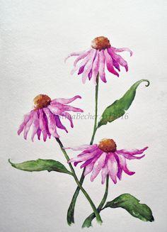 purple coneflower watercolor painting