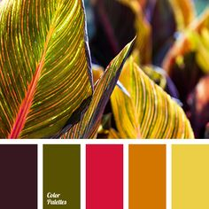 bright red color, bright yellow color, color matching for interior, crimson-red color, dark green color, eggplant color, olive color, orange color, purple color, red color, warm orange color, yellow color.