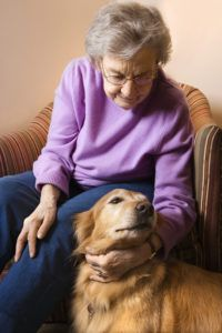 Preparing Emergency Shelter for Your Aging Parent's Pet