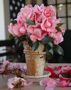 Flower Arrangements for Spring | Allen's Blog - P. Allen Smith Garden Home