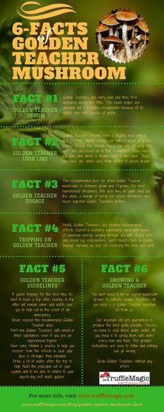 6 Facts of Golden Teacher Mushroom Edible Mushrooms, Stuffed Mushrooms, Mushrooms Recipes, Wild Mushrooms, Growing Psychedelic Mushrooms, Psilocybin Mushroom, Mushroom Grow Kit, Mushroom Cultivation, Psychedelic Drugs