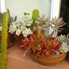 35 Indoor And Outdoor Succulent Garden Ideas Planters succulent pots Succulents Chicks and hens Types Of Succulents, Growing Succulents, Succulents In Containers, Cacti And Succulents, Planting Succulents, Succulent Gardening, Succulent Pots, Container Gardening, Succulent Ideas