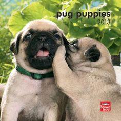 Puppies 2013 Mini Wall Calendar Pug Puppies so soft!Pug Puppies so soft! Pug Love, I Love Dogs, Cute Dogs, Cute Baby Animals, Funny Animals, Animals Dog, Baby Pugs, Louis Armstrong, Pug Puppies