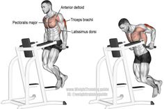 Triceps dip exercise