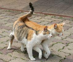(lol)Cats in Love