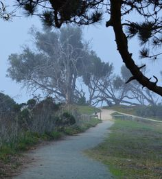 Pathway - North Beach Campground - Pismo Beach, CA Site 11 is great, good shade, great wind protection and huge