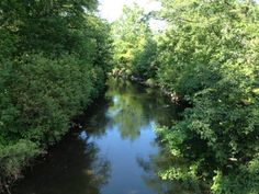 This too is the Bronx River. We discovered this beautiful part of the 23 mile river near the Bronx Zoo on a bike tour. (NYC: 8:55 PM - 31 May 12)