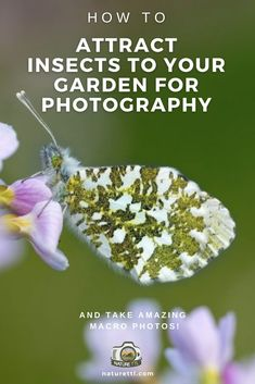 Tips for attracting insects into your garden so you can take brilliant macro photos of them! Learn more in this nature photography tutorial.