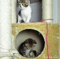 "catsdogsblog: "" More GIFs http://catsdogsblog.com/ """