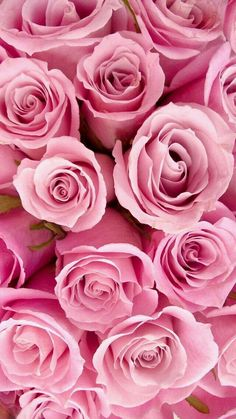Imagen de rose, pink, and flowers