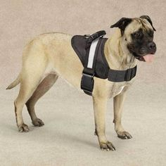 """Harnesses: Measure girth around the broadest part of the chest and add 2"""". NEW Big Dog Soft No Pull Harness. We were Happy To introduce a revolutionary NO CHOKE Big Dog No Pull Harness."""