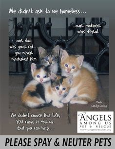 We didn't ask to be Homeless.. our mother was feral, our dad was YOUR cat.. YOU NEVER NEUTERED. We didn't choose this life, YOU chose it for us. BUT you can help PLEASE SPAY & NEUTER YOUR PETS <3 Adopt from shelter/rescue. PREVENTION is KEY!